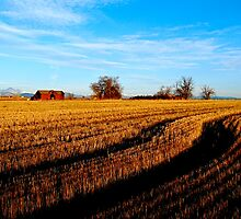 Fields of Grass by Pamela Hubbard