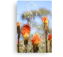 Red Hot at The Springs Canvas Print