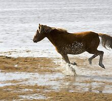 Horse on the beach by franceslewis