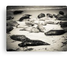 Seal Beach Canvas Print