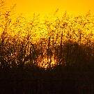 Sun fire amongst the grass by Fineli