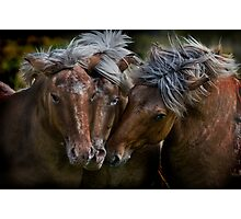 Horse Lords Photographic Print