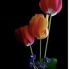 Tulips (Ambient Light) by goddarb