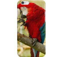 Macaw Parrot iPhone Case/Skin