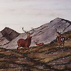`Cabrach Stags' greetings card & Prints by sharpie