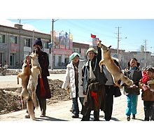 Tibet, wolves Photographic Print