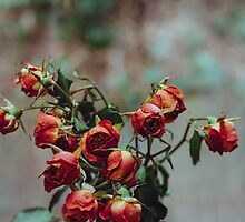 Windowsill Roses by Bethany Helzer