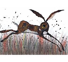 DASHING HARE Photographic Print