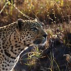 On the hunt - Djuma Game Reserve by Bassy