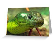 Australian Tiger Snake Greeting Card