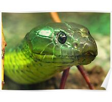 Australian Tiger Snake Poster