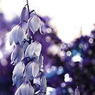 Serenity and Bokeh- Queens Park, Western Australia by Ashli Zis