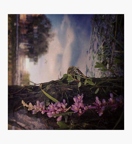 """""""Unique"""" Photographic Print"""