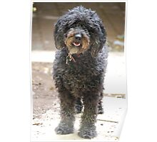 Ruby, the shaggy black dog Poster