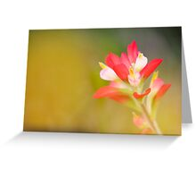 Paintbrush - Solitary Bloom Greeting Card
