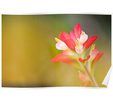 Paintbrush - Solitary Bloom Poster