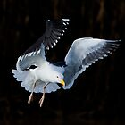 Great Black-backed Gull by Neil Bygrave (NATURELENS)