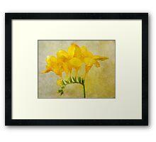Vintage Yellow Freesia Framed Print