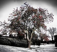 Winter Blossom by LMcCPhotography