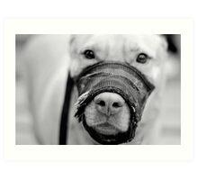 Muzzled Pooch (B&W) Art Print