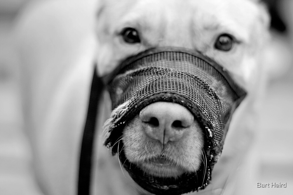 Muzzled Pooch (B&W) by Bart Heird