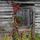 the ol' barn door by George  Close