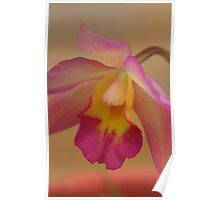 Orchid-Softness-Beauty Poster