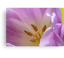 Purples and pinks Canvas Print