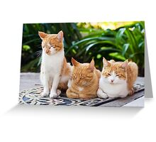 The Three Hombres Greeting Card