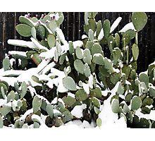 Frozen Cactus.... Photographic Print