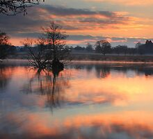 Reflections in Pink by Martin Griffett