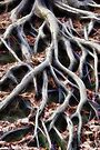 Meandering tree roots by Avril Harris