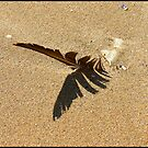 Flight of sand by Jim Young