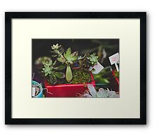Succulent Friends  Framed Print
