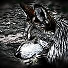 Timberwolf by shutterbug2010