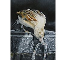 Bird Oil painting  Photographic Print