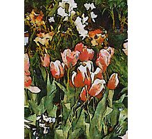 Glory of Spring Photographic Print