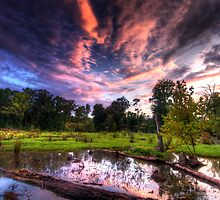 A Maryland Swamp - Sunset by capturedjourney