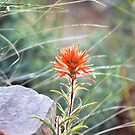 Lone Paintbrush by Kim Barton