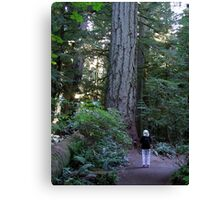 A Walk Among Giants Canvas Print