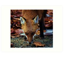 Cunning- Out foxing the fox. Art Print