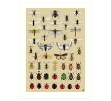 Entomology Insect studies collection  Art Print