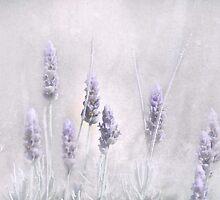Lavender Essence by garts