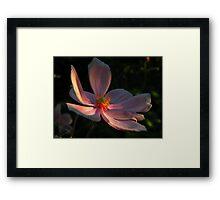 Una flor ........ Framed Print