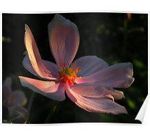 Una flor ........ Poster