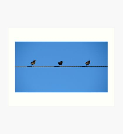 """What a bunch"" European Starlings  Art Print"