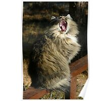Cat Yawn Poster