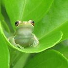 Cute Wittle Baby Froggie by Love4KittenZ