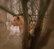 Out On A Limb by Franco De Luca Calce