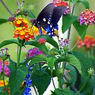Butterfly & Flowers by Ruth Lambert